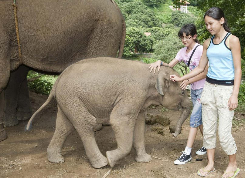 5 GREAT PLACES TO VISIT FOR ANIMAL TOURISM IN PHUKET